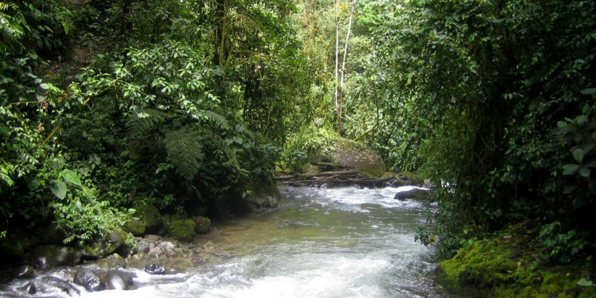 Mindo Cloud Forest River
