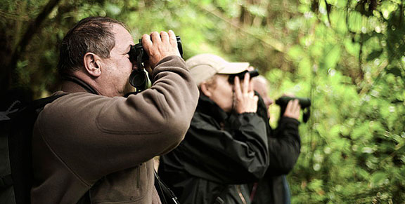 Birdwatching tours