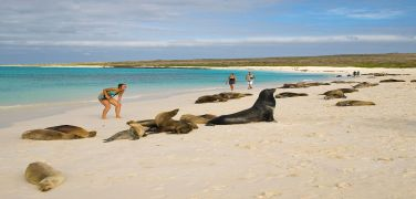 sea-lions-in-galapagos