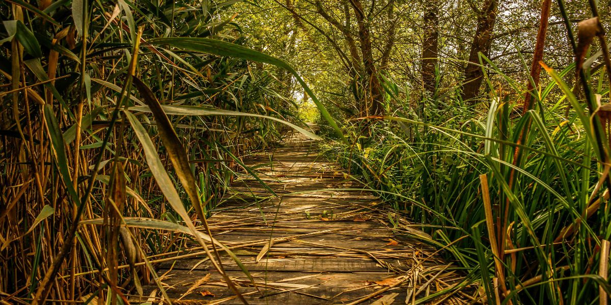 guayaquil-chrute-mangrove-reserve-path